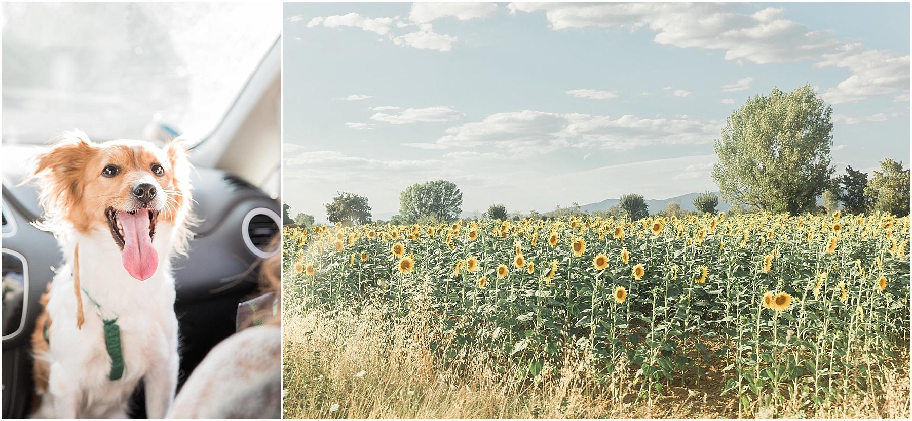 scenery while driving to Tenimenti d'Alessandro Osteria Borgo Syrah in Cortona Italy with cutest dog ever